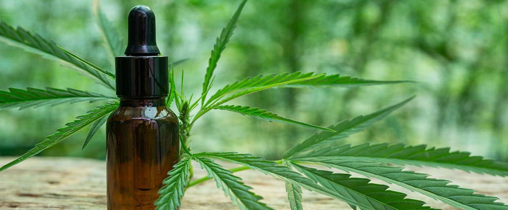 Les bienfaits de l'huile CBD - Blog CBd GreenForestCBD